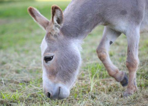 donkey on grass lawn