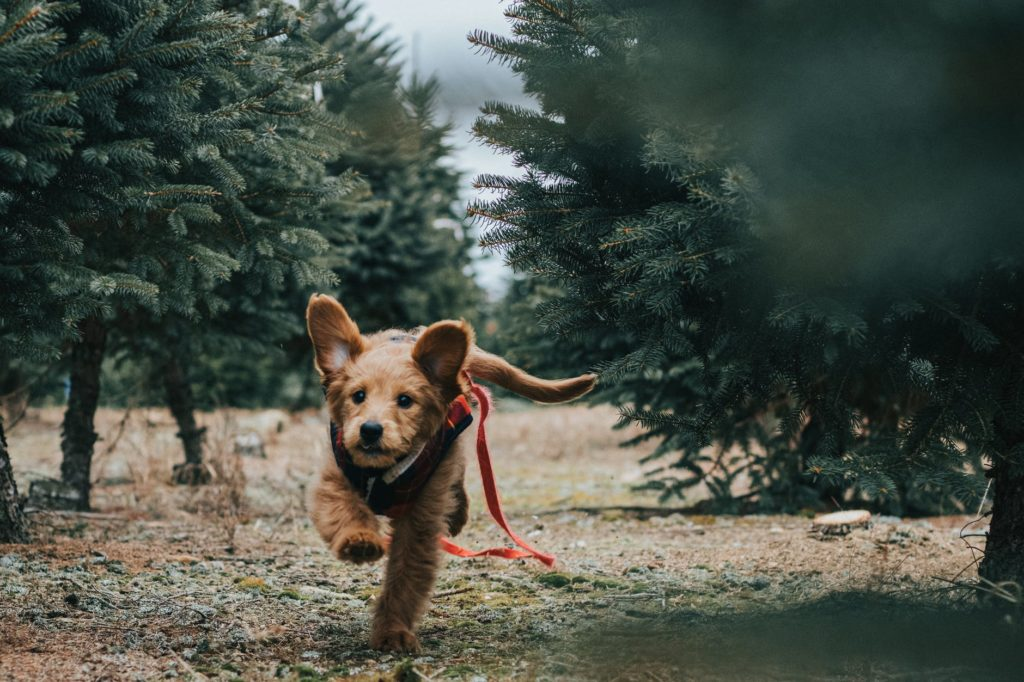 selective focus photo of dog