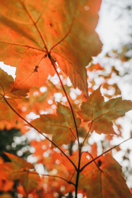 wood sun park leaf