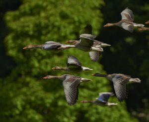 nature sky bird water