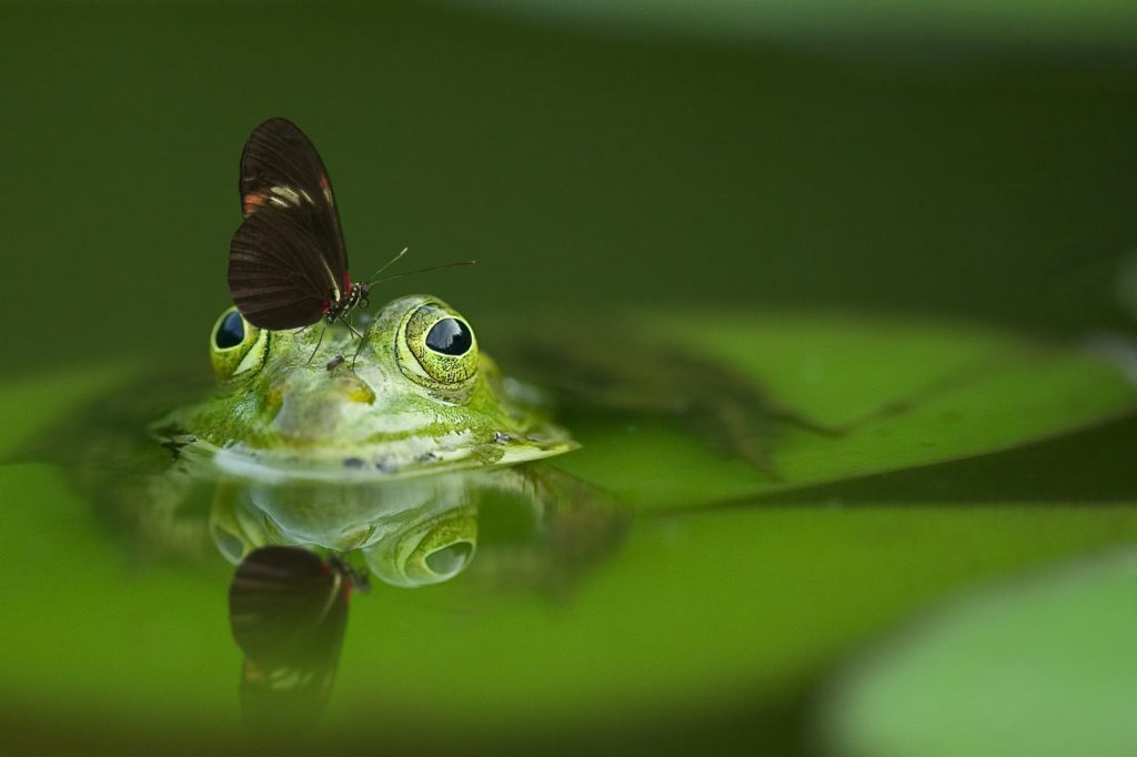 nature water eyes pond