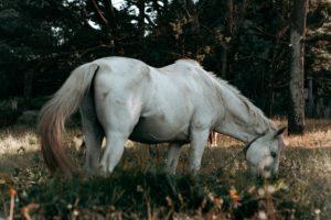 beautiful horse on green grassy pasture