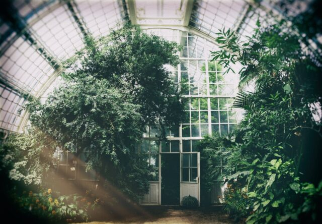 green plants in a greenhouse