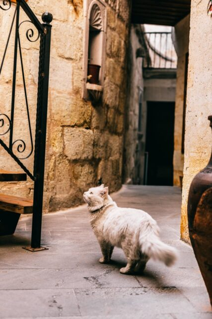 cat standing near stone wall