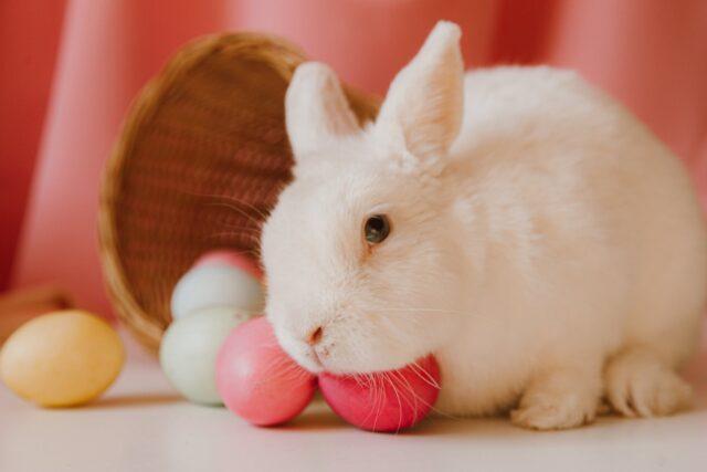 white rabbit beside colored eggs