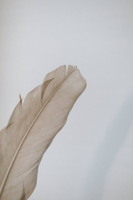 big beige feather against white wall