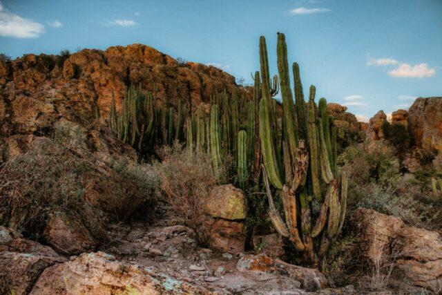 landscape sunset desert dry